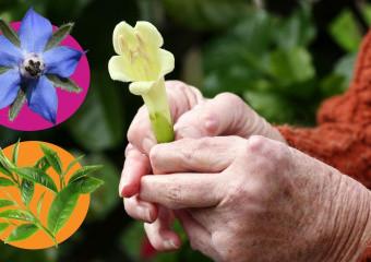 8 лікарських рослин для полегшення перебігу ревматоїдного артриту